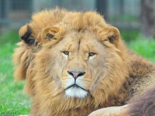 Bursa Zoo © Bursa Zoo