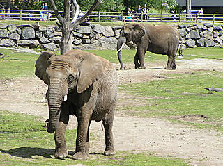 Elefanten im Borås Zoo. © Kakakrokodil