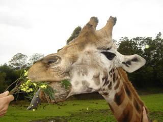 Orana Wildlife Park © kriskaer