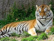 Oakland Zoo © Treehgr
