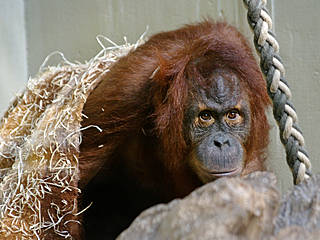 © Zoo Heidelberg, Foto: Heidrun Knigge