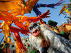 Lion King & Jungle Festival