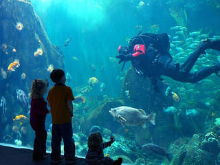 Vancouver Aquarium © Vancouver Aquarium