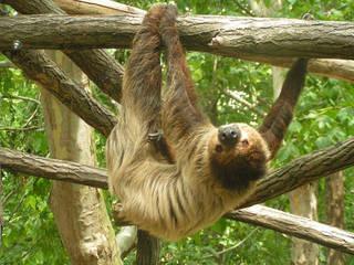Zoo Gyor © Zoo Gyor