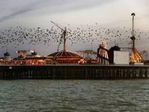 Das Brighton Pier in Brighton © Brighton Pier